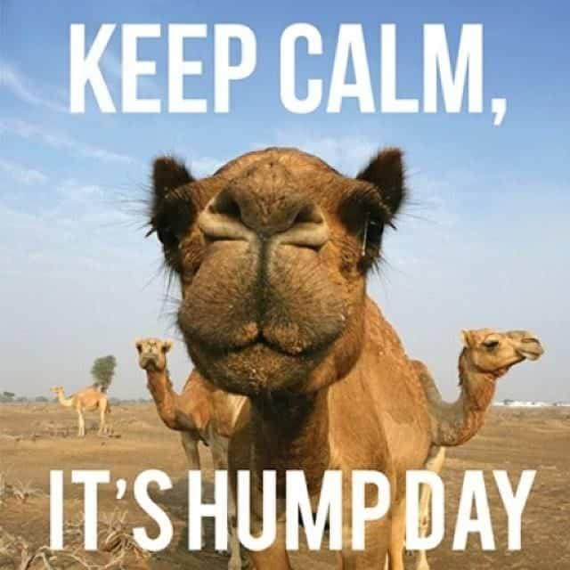 Keep Calm It S Hump Day